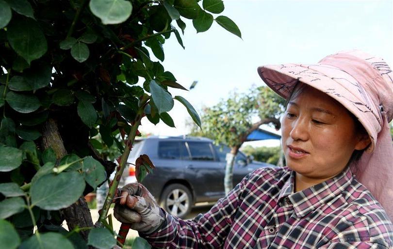 河南南阳:打造产业基地 助力脱贫增收