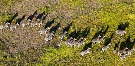 [组图]英摄影师900米高空俯拍非洲野生动物