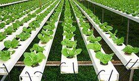 怎样让农业农村更加活起来