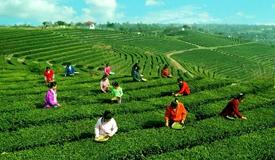 热议:怎样让农业农村更加活起来