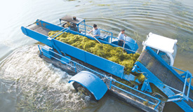 临淄:河长制还改变了什么