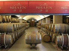 沙恩国际庄园的地下酒窖
