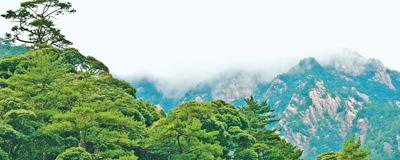 野草野樹 都在使勁長牯牛降保護區設立三十余年,管理機制不斷完善,野生動物種類增加了48種。﹝閱讀﹞