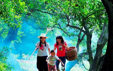 桂花专业村的供给侧改革故事