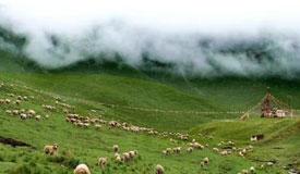 甘肃祁连山自然保护区生态环境问题被通报