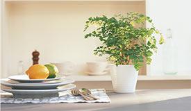 家中多盆植物少买药 四个清洁失误易致病