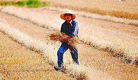省级政府耕地保护责任目标考核办法发布