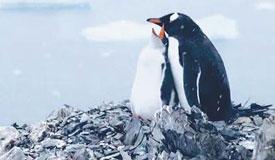 南极 世界尽头游不同
