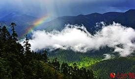 西藏鲁朗林海美如仙境