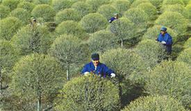 未来5年 北京再造百万亩林