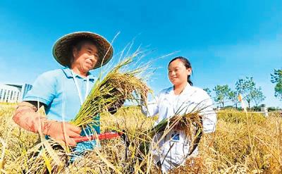 盐碱地里稻花香 亿亩荒滩变粮仓