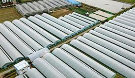 福建建瓯:一村一品 科技富农