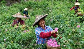 发展生态产业 助推乡村振兴