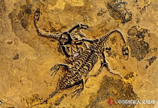 对于搞清楚三叠纪所有海生爬行动物的分布和迁徙方式有重大意义.