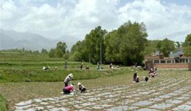 中药材农民专业合作社助力脱贫