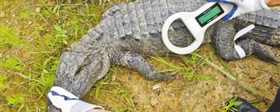 科技,让我们更懂野生动物在研究中,将红外相机、卫星定位、电子芯片、无人机等运用于动物监测。[阅读]