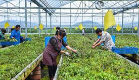 浙江慈溪:盐碱地科技种植助力现代农业