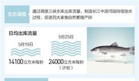 长江中游四大家鱼产卵量7年增31倍