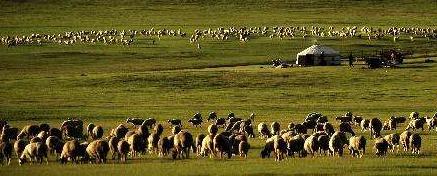 畜牧业快步转向绿色发展饲料产业体系向绿,现代育种向绿,粪污资源化利用向绿。[阅读]
