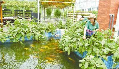 浙江绿谷小镇:无土栽培 绿色种植