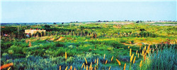 """万晓白:荒漠上,与草共生的英雄18年的荒漠苦战,6570个日夜的沙地煎熬,曾经的""""火沙坨子""""终于变成了葱郁的绿洲。[阅读]"""