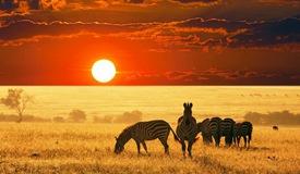 中国赴非游客量连年增长 非洲旅游迎来发展黄金期