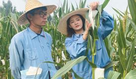 玉米地里的大事业