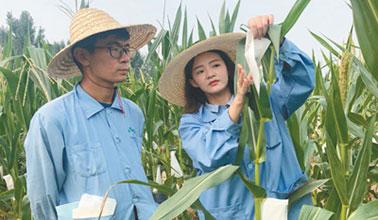 24岁的孙轩在玉米地里的大事业