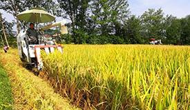 我国水稻分子设计育种取得新进展