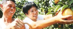 金秋庆丰收  喜悦满神州围绕生产、生活、生态和美景、美食庆丰收,各地活动如火如荼。[阅读]