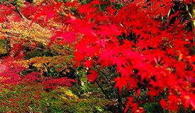 打卡京城赏红叶胜地 找寻红叶诗意