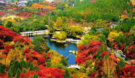 济南红叶谷层林尽染漫山红