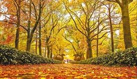 落叶不扫景更好