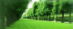 """森林河南规划出炉 绿化提速换挡五年增绿山川平原、十年建成森林河南。河南正式吹响了森林建设的""""集结号""""。[阅读]"""