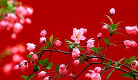雪霽春歸︱品讀名家筆下的春頌雅集