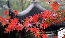 中国古典园林:处处蕴诗意 时时漾诗情