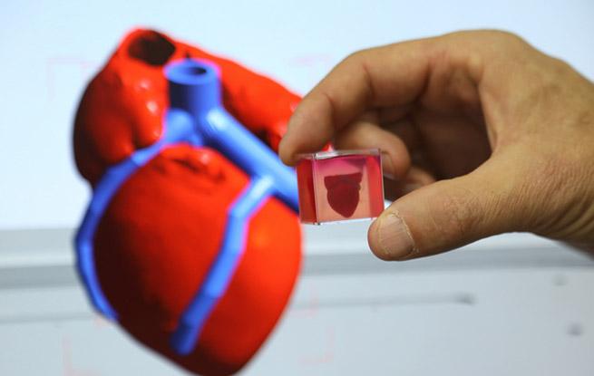 """以色列研究人员称3D打印出全球首颗""""完整""""心脏"""