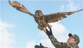 在呼倫湖畔守護野生動物