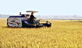 粳米期货即将上市 合约规则正式亮相