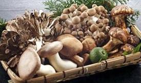 香菇、金针菇、平菇!秋季吃蘑菇有啥讲究