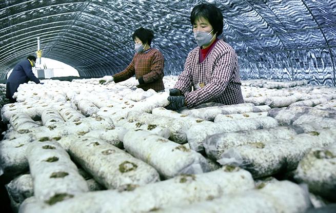 春耕备耕物资供应充足 为春季农业生产顺利推进夯实基