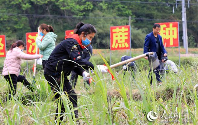 广西农村组建村级劳务队助力脱贫攻坚