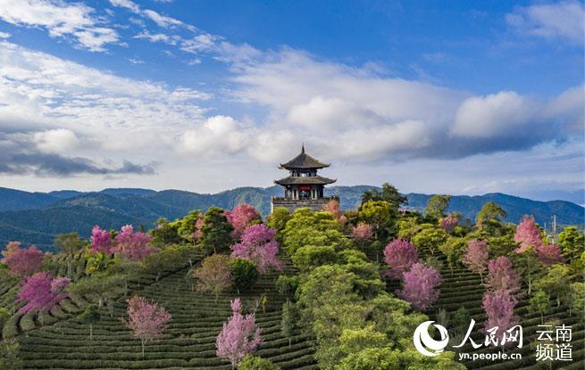 """首个""""国际茶日"""":看云南的大好茶山"""