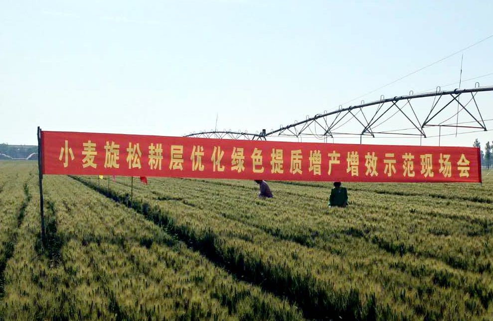 新技术助力小麦增产两成多