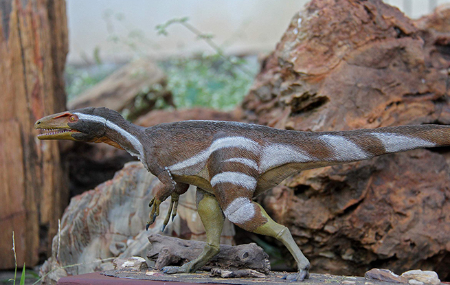 巴西发现新品种恐龙与中国新疆左龙有亲