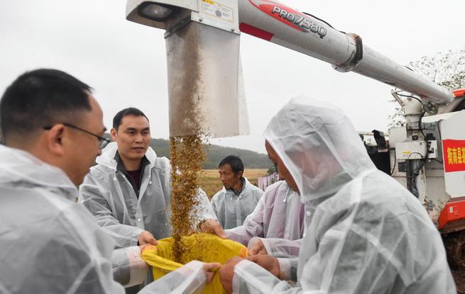 袁隆平团队杂交水稻双季亩产突破1500公斤
