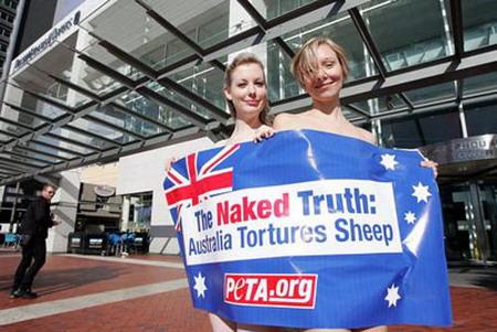 美女:绵羊裸体抗议澳洲农民虐待组图美女卫衣北欧图片