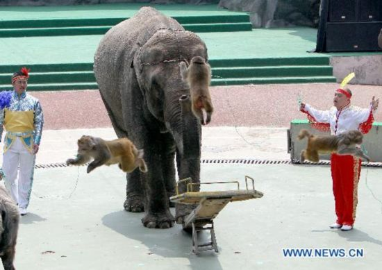 Animal carnival held in shanghai 3 people 39 s daily online for Adolfo dominguez 90001
