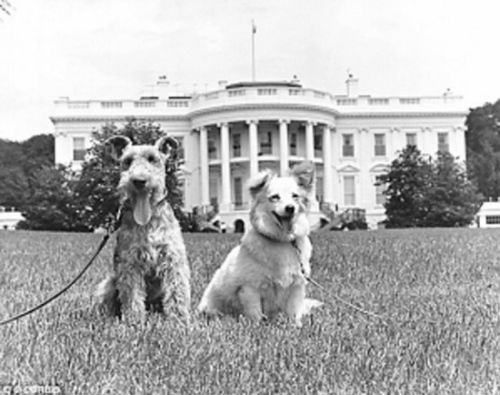 """冷战  礼物  赫鲁晓夫送给肯尼迪家庭的""""绒毛"""",以及肯尼迪原有的宠物狗查理。"""