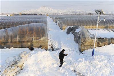 昨日,延庆杨户庄村,一名村民在蔬菜大棚前铲雪。该村因大雪致100多个蔬菜大棚垮塌。